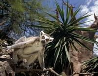 Animaux stars du zoo : Le bioparc de Fuengirola