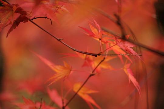 Rouge est la couleur de l'automne