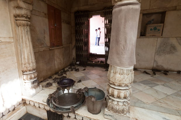 Karni Mata en Inde