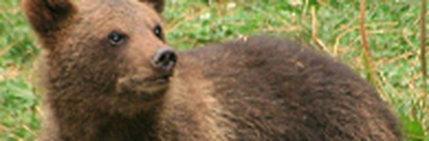 Donnez un nom à quatre petits oursons