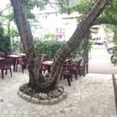Restaurant : Pizza Latina  - La terrasse -