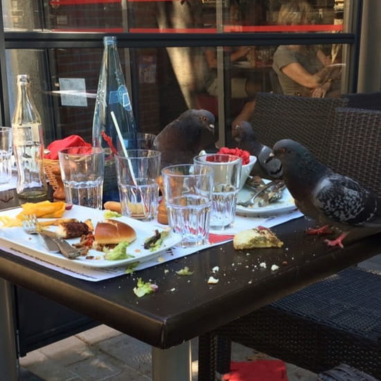 Restaurant : Hippopotamus