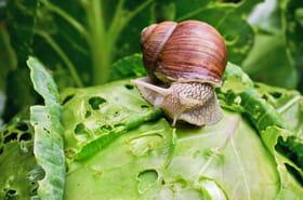 Des remèdes naturels pour lutter contre les nuisibles du jardin