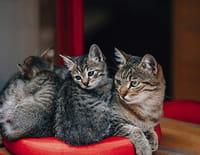 La vie secrète des chats : Quand les chats font la loi