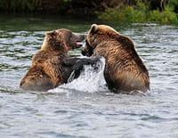 Ushuaïa nature : Les géants du Far East