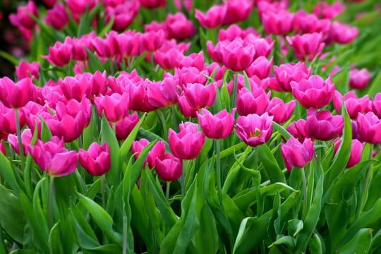 Fleurs de printemps: que faire au jardin