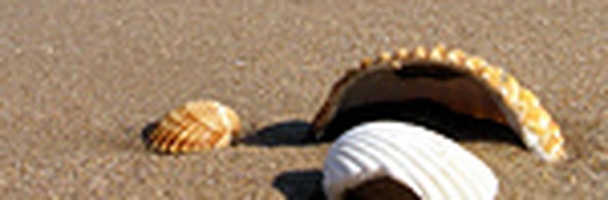 10 gestes pour préserver les plages