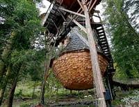 Sur un arbre perché : Rêves de cabanes