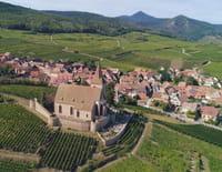 Des racines et des ailes : Terroirs d'excellence en Alsace