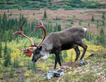 A la découverte de l'Alaska