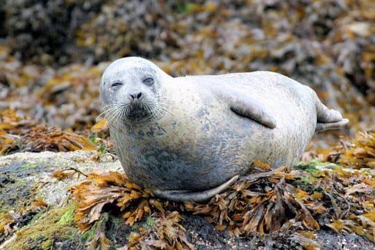 Phoque sur les côtes sud de l'Irlande