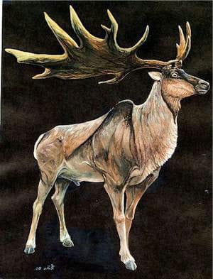reproduction du magalocéros giganteus.