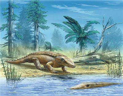 reconstitution de chroniosuchus paradoxus. la morphologie des anthracosaures