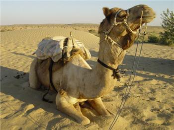 un partage de chameaux en nombre inégal ?