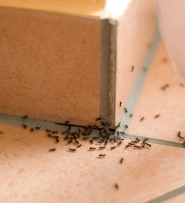 faites fuir les fourmis. Black Bedroom Furniture Sets. Home Design Ideas