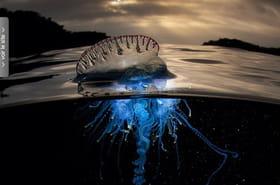 Australie : ses photos de fonds marins sont spectaculaires