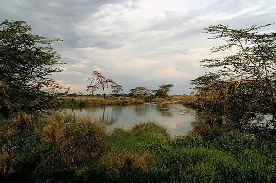 Nature sauvage d'Afrique de l'Est