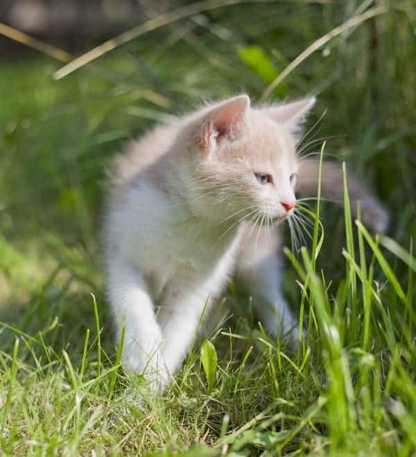 Repousser Les Chats