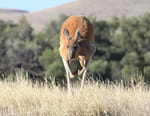 Irrésistibles marsupiaux
