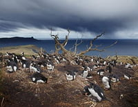 Patagonie dernier paradis sauvage : La richesse des côtes