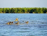 Deltas du monde : L'Irrawaddy : Le monde fascinant de la mangrove
