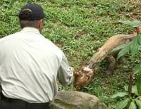 Chasseurs de pythons : Serpents très mortels