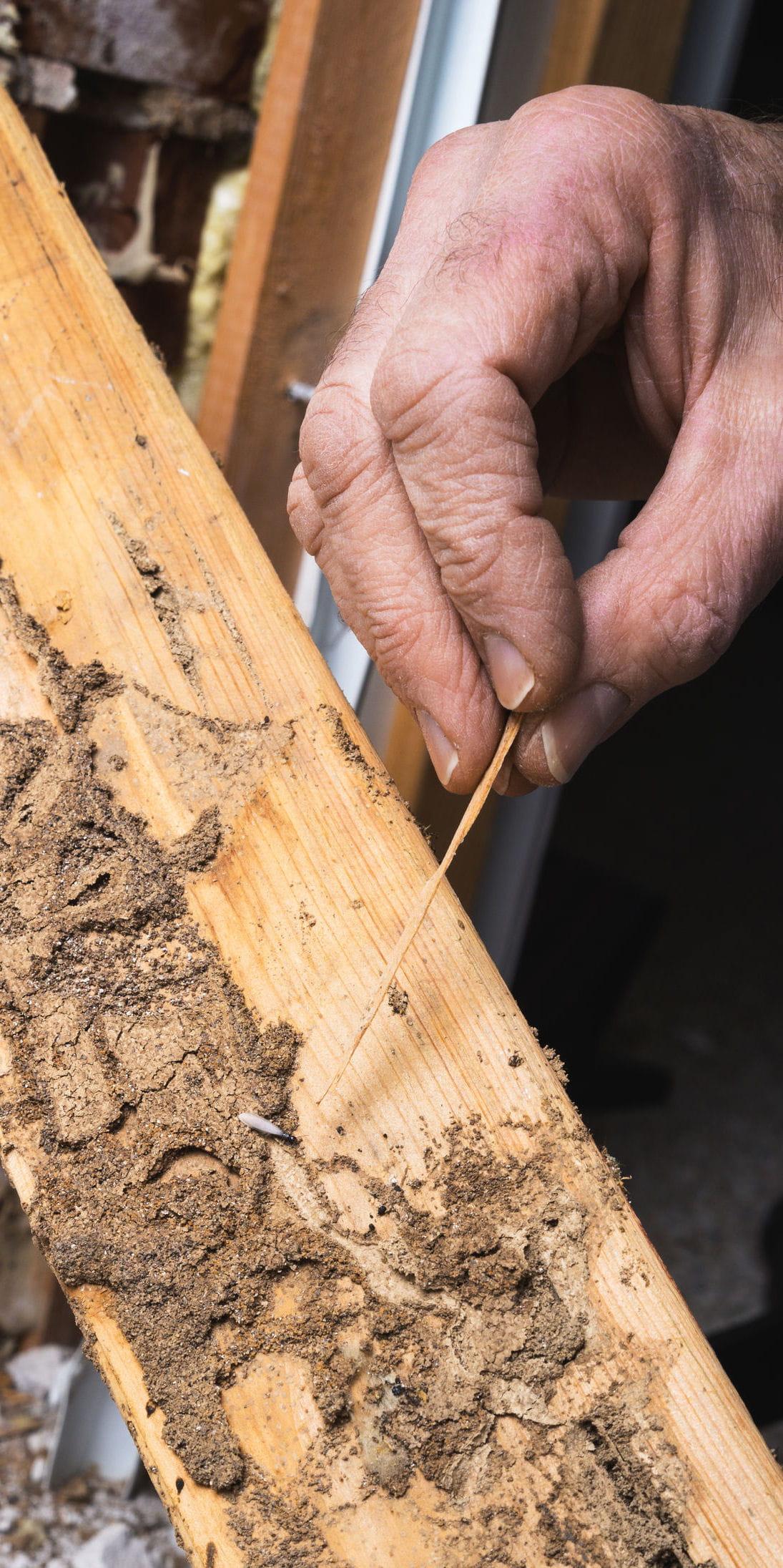 l 39 absence de termites. Black Bedroom Furniture Sets. Home Design Ideas