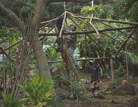 Des murs en héritage, Nouvelle-Calédonie, habiter le passé